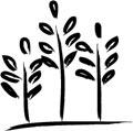 Des céréales cultivées avec passion